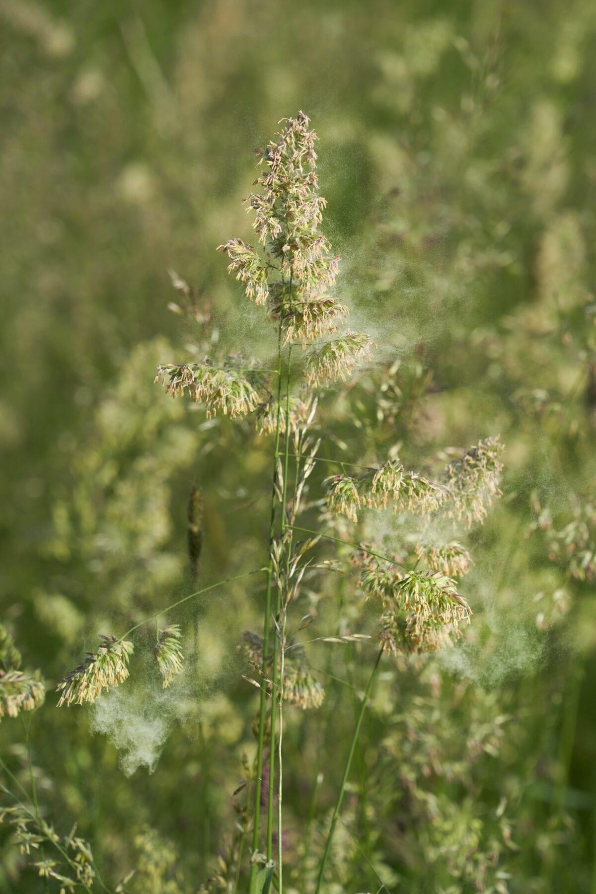 Plant met pollen