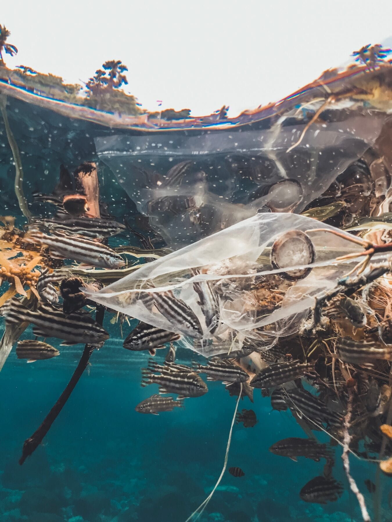 Watervervuiling milieuproblemen