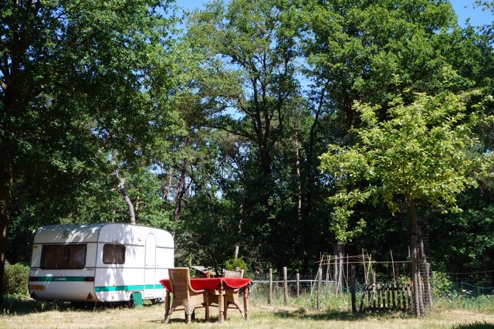 Campspace accommodatie overnachten bos