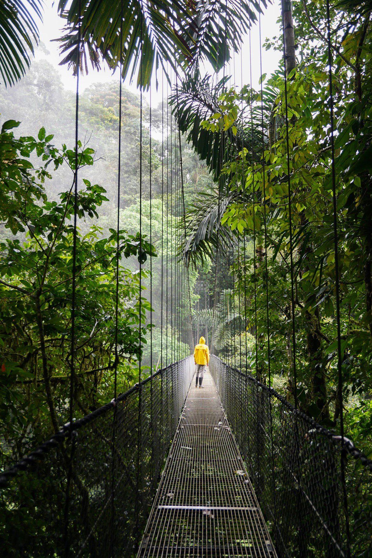 Ongerept Costa Rica regenwoud