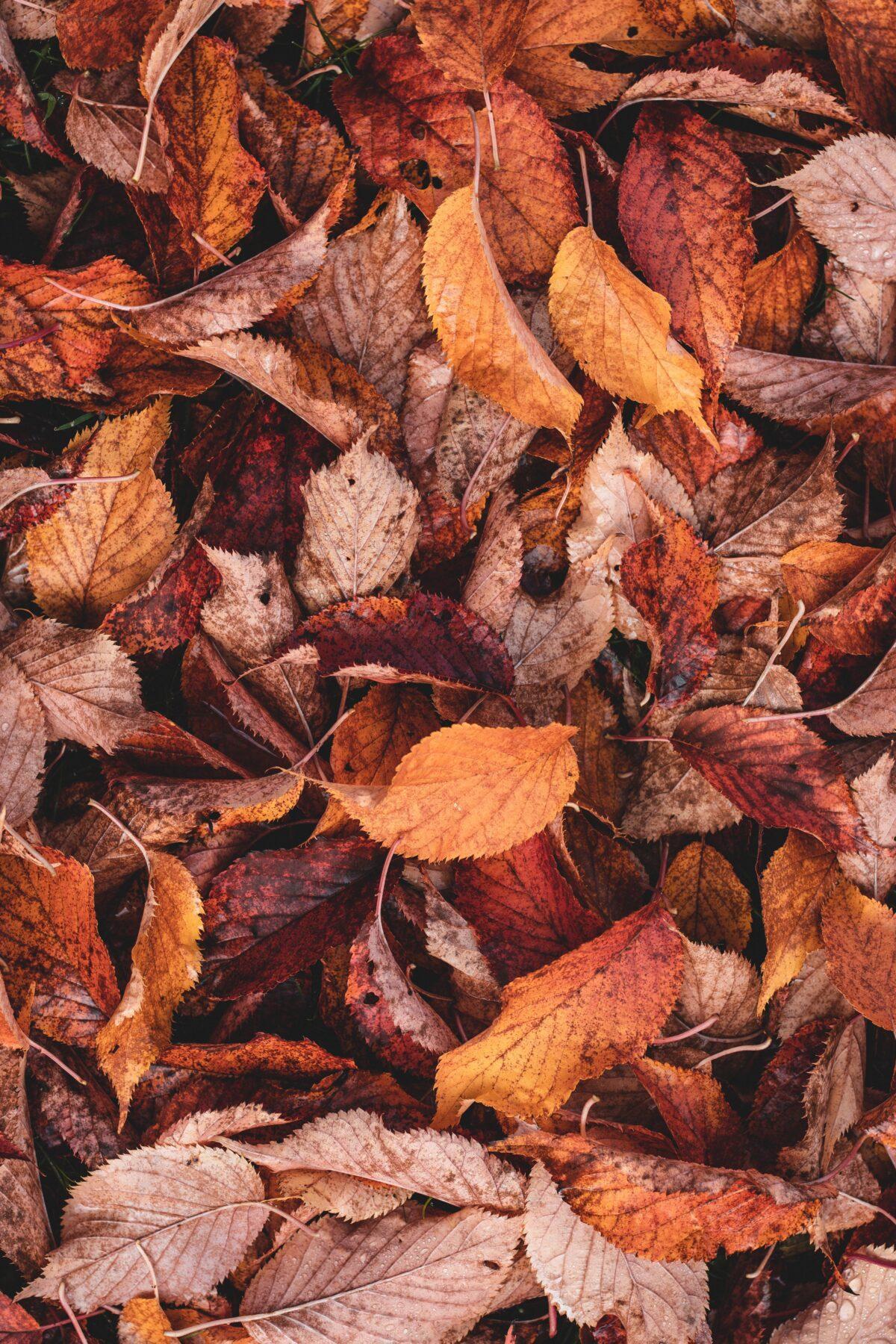 Wanneer begint de herfst, bladeren