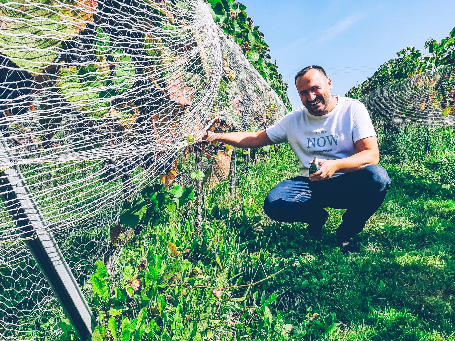 Fietsen in Polen - wijngaard